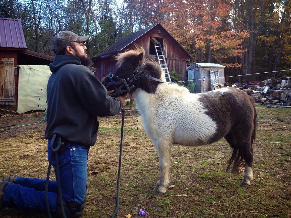 Miniature horse with Equine Dentist Frank Vela